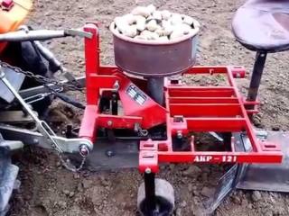 sazec-brambor
